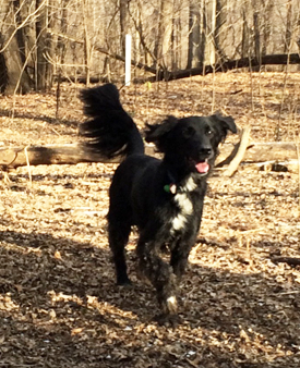 Photo of Henry running in the woods
