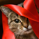 ribbon cat.jpg
