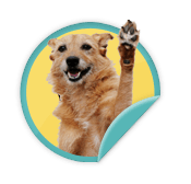 High Five - for those animal lovers who have raised funds for 2 or more Walk for Animals